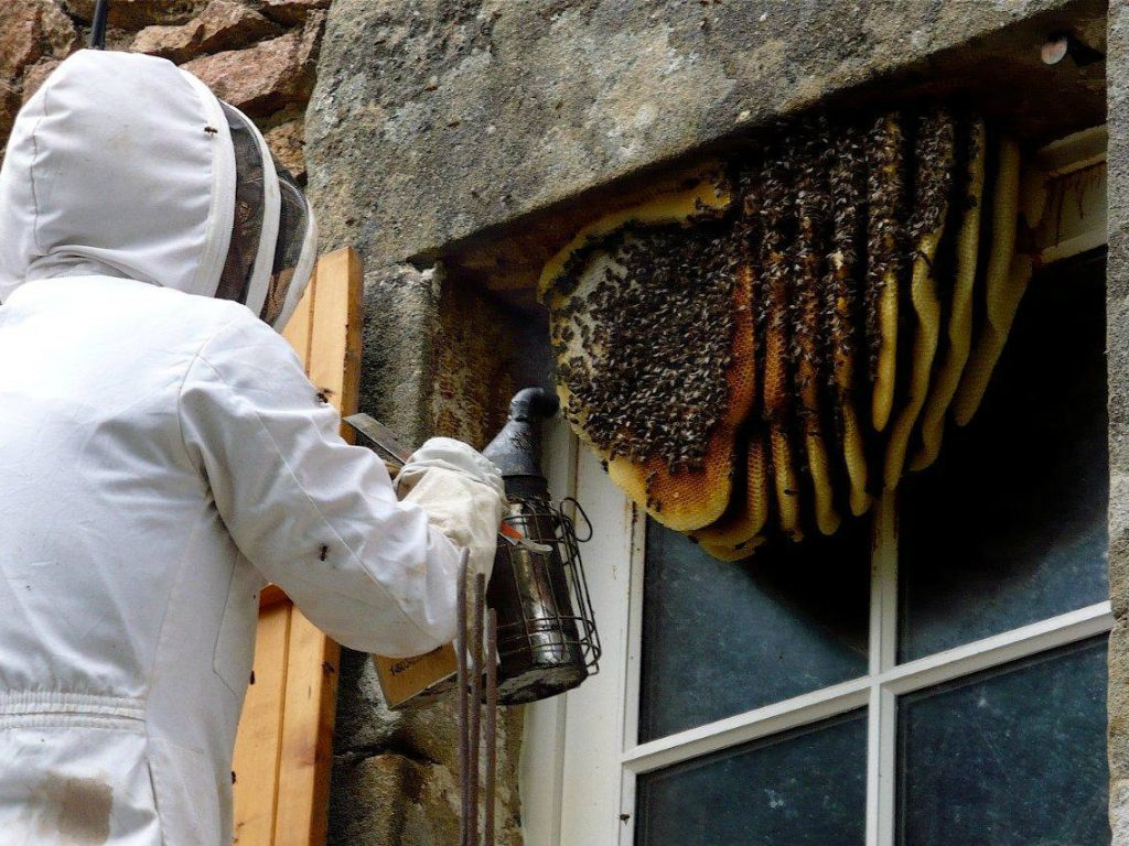 Merlin's Bee Removal
